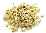 Organic Sprout it Out